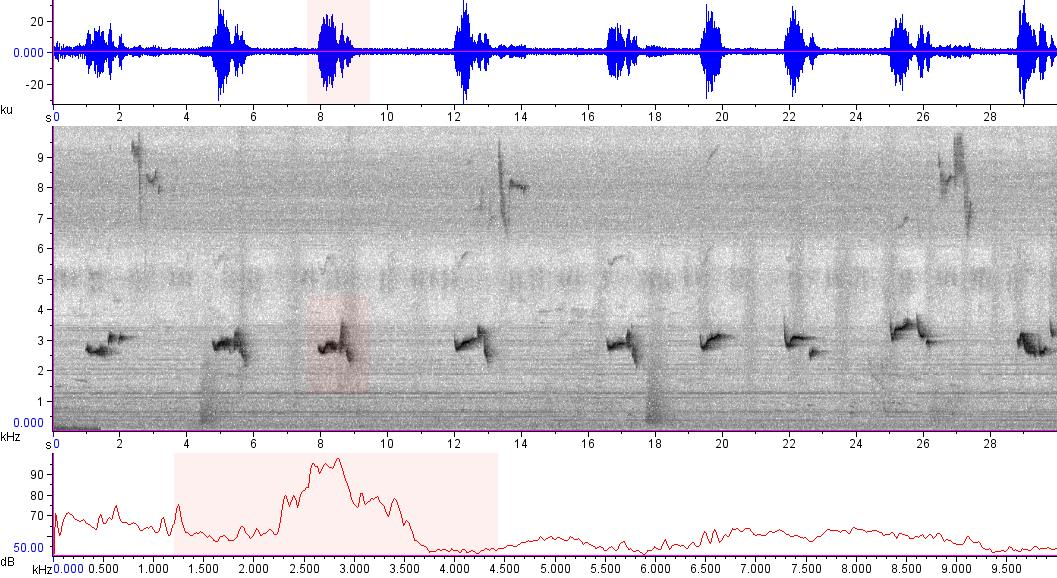 Sonogram of recording #AV 15595
