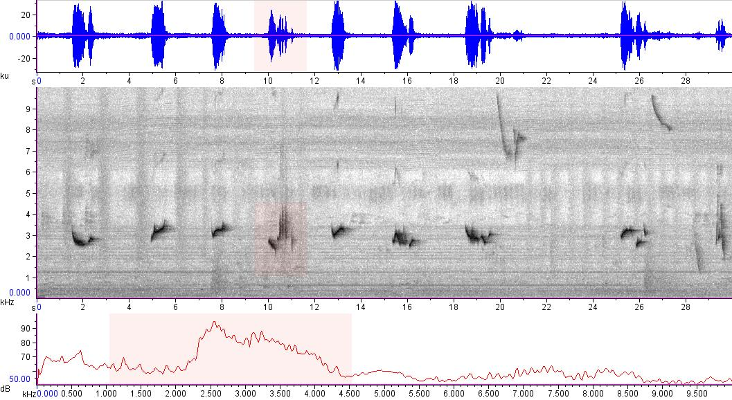Sonogram of recording #AV 15596