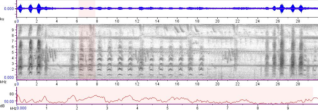 Sonogram of recording #AV 15598