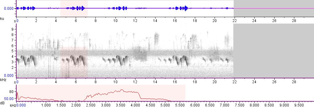 Sonogram of recording #AV 15626