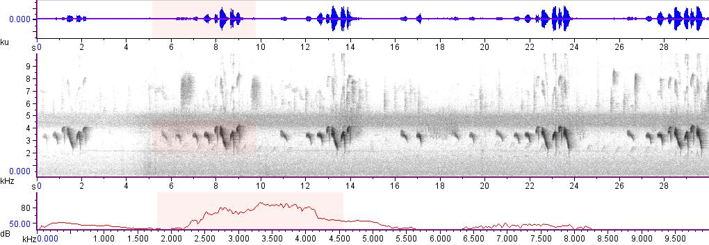 Sonogram of recording #AV 15627