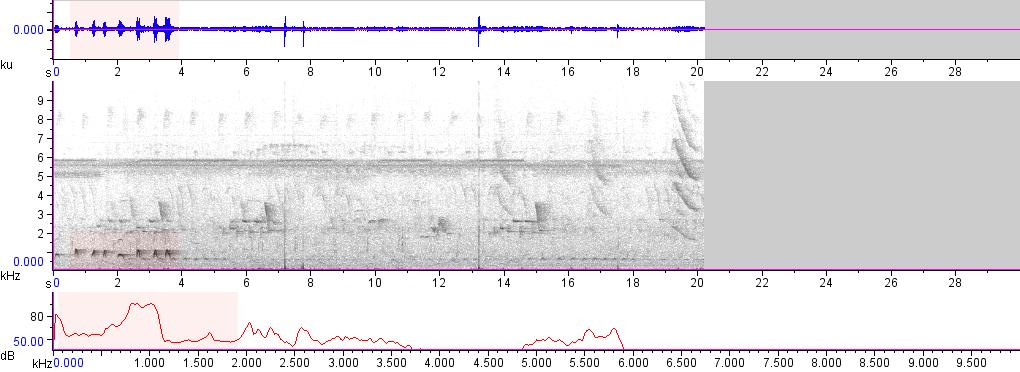 Sonogram of recording #AV 15641