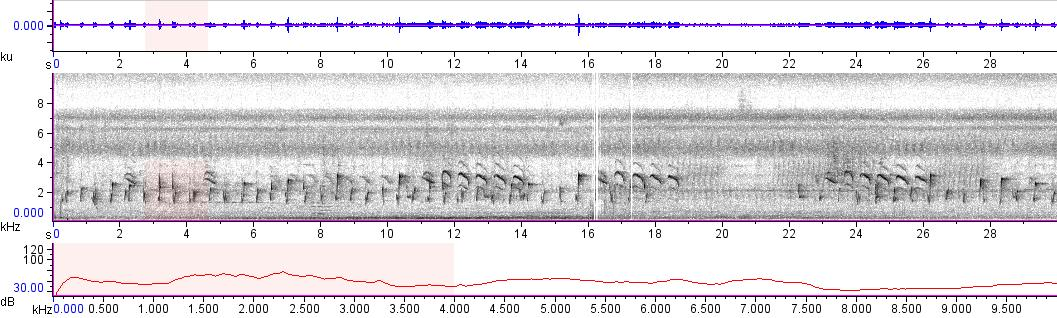 Sonogram of recording #AV 15650