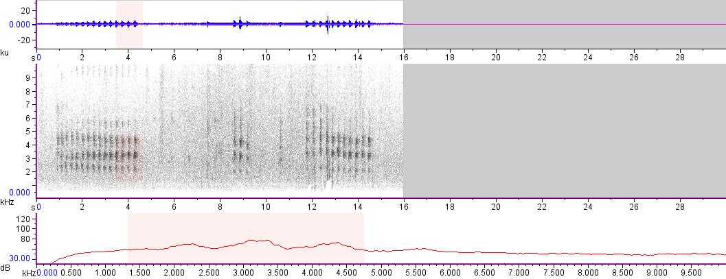 Sonogram of recording #AV 15675