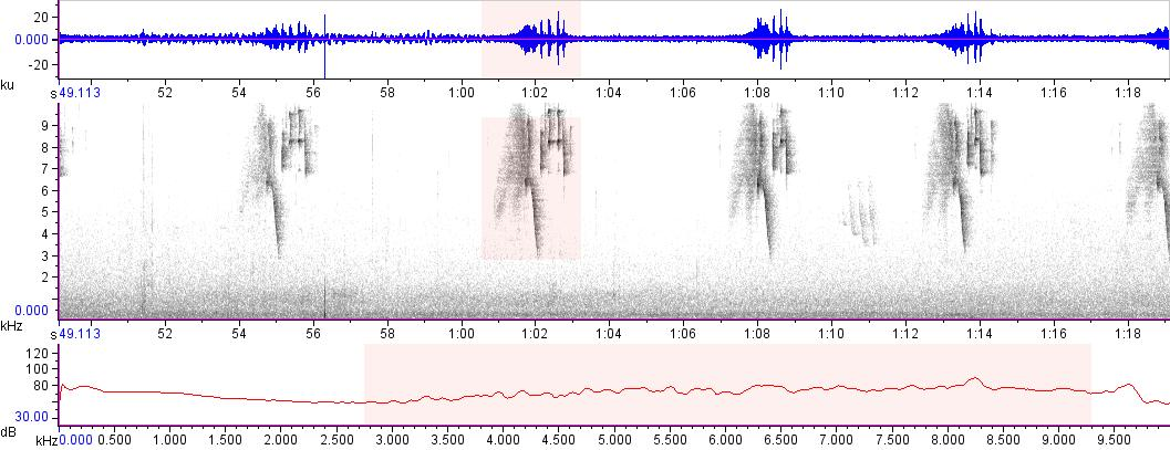Sonogram of recording #AV 15681
