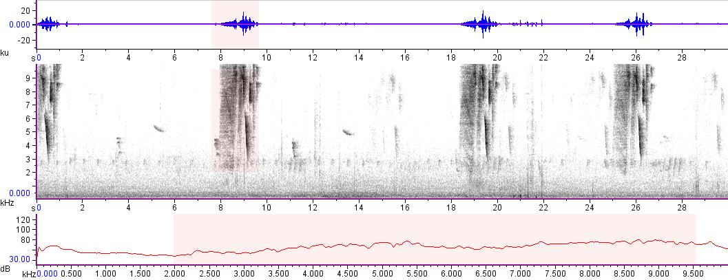 Sonogram of recording #AV 15686