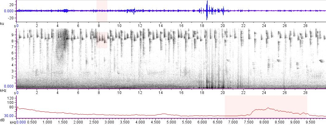 Sonogram of recording #AV 15691