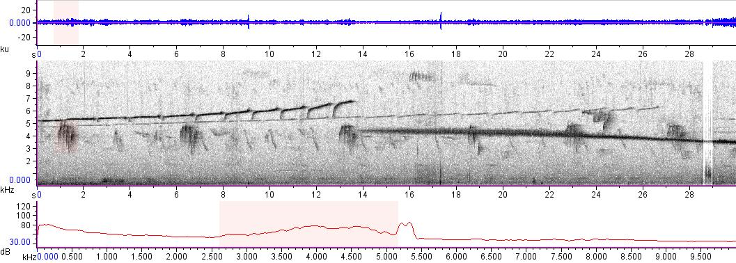 Sonogram of recording #AV 15704
