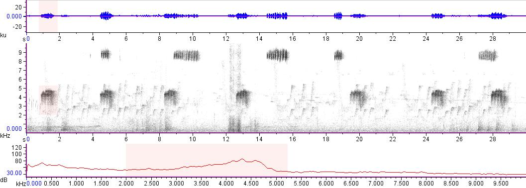 Sonogram of recording #AV 15709
