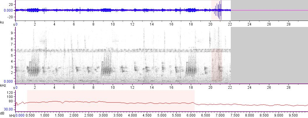Sonogram of recording #AV 15725