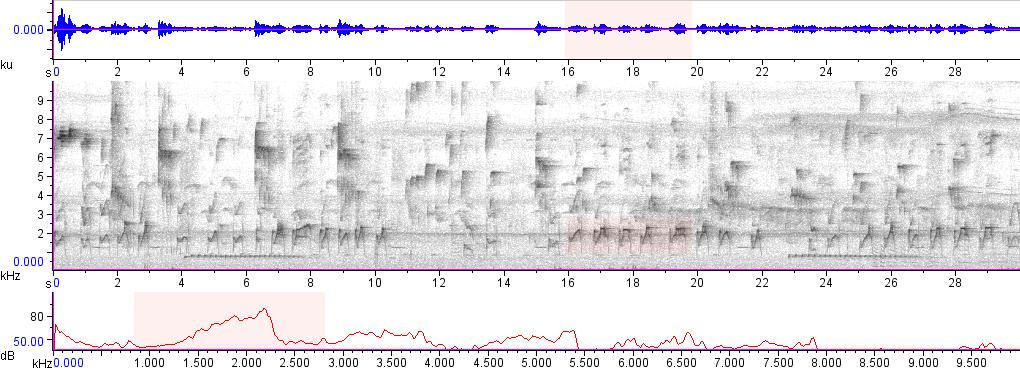 Sonogram of recording #AV 15745