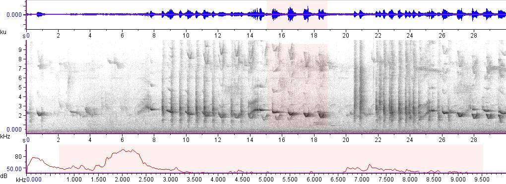 Sonogram of recording #AV 15746