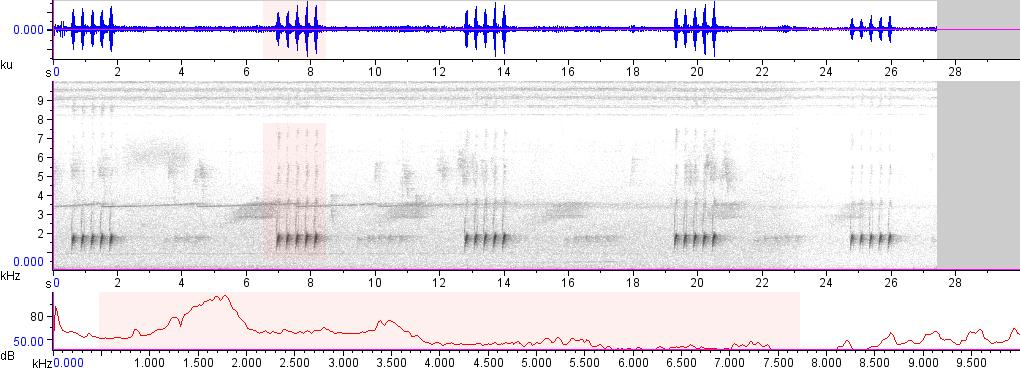 Sonogram of recording #AV 15750