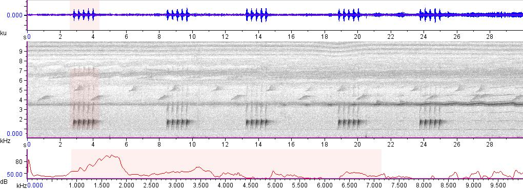 Sonogram of recording #AV 15751
