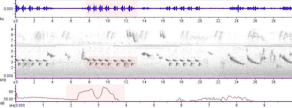 Sonogram of recording #AV 15771