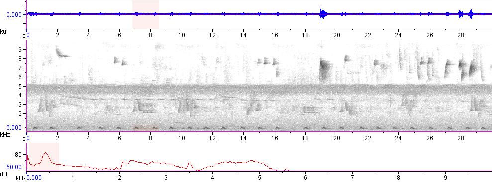 Sonogram of recording #AV 15776