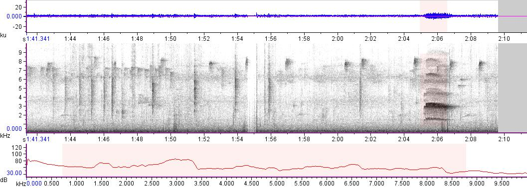 Sonogram of recording #AV 15834