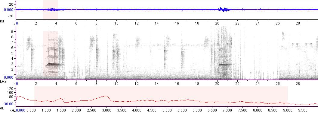 Sonogram of recording #AV 15835