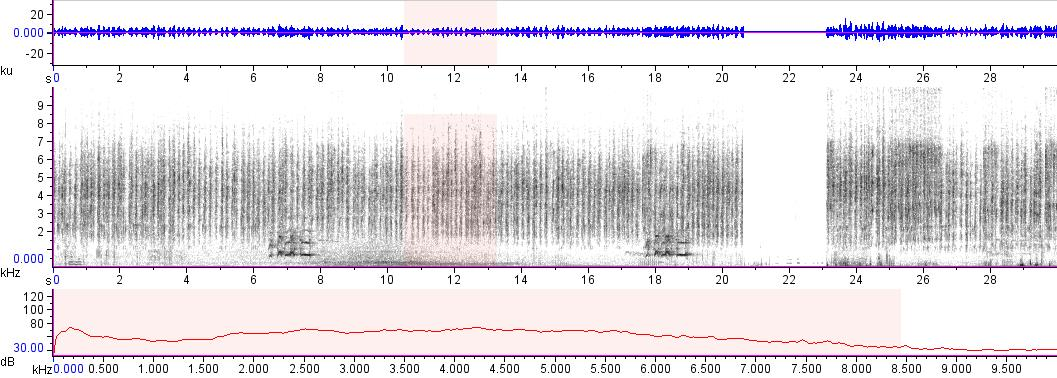 Sonogram of recording #AV 15836