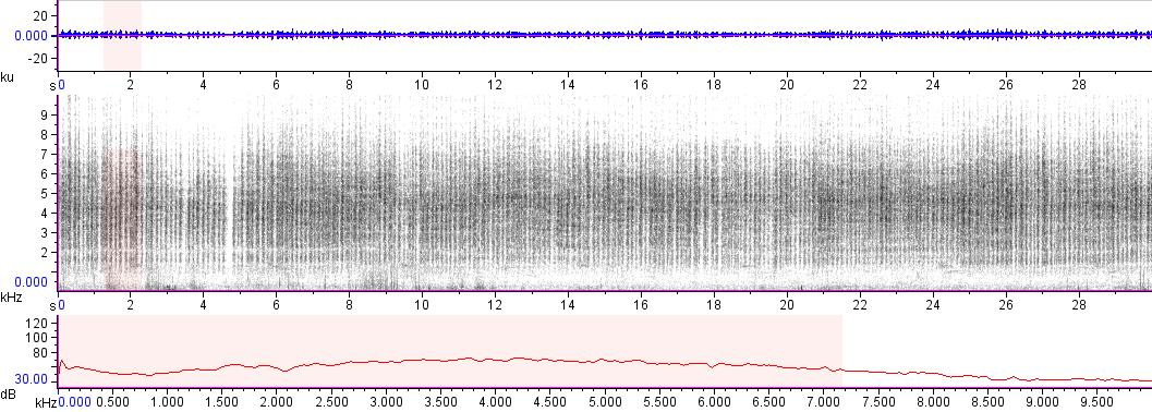 Sonogram of recording #AV 15837