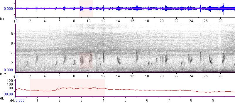 Sonogram of recording #AV 15865
