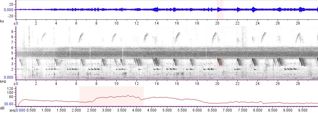 Sonogram of recording #AV 15883