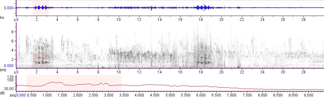 Sonogram of recording #AV 15886