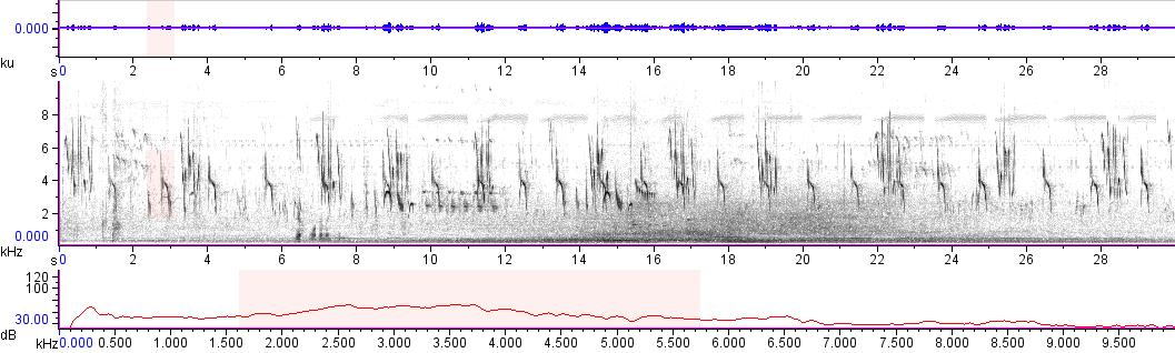 Sonogram of recording #AV 15899