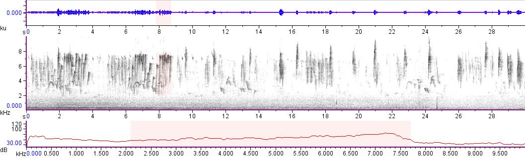 Sonogram of recording #AV 15935