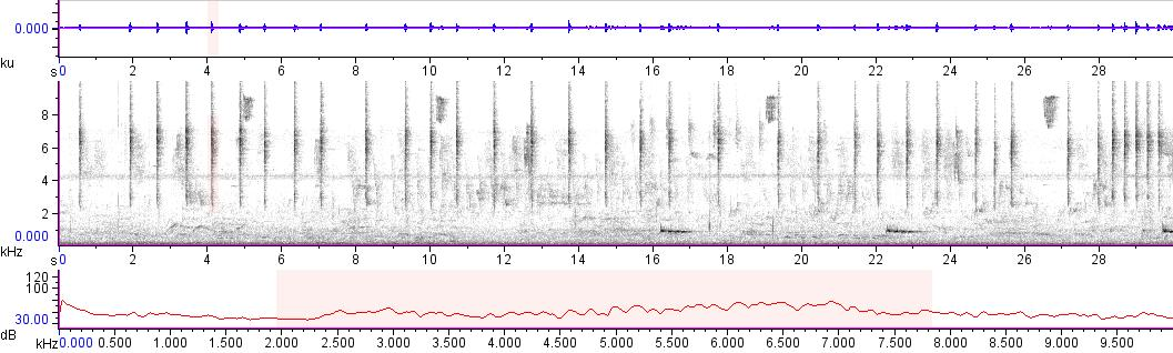 Sonogram of recording #AV 15939