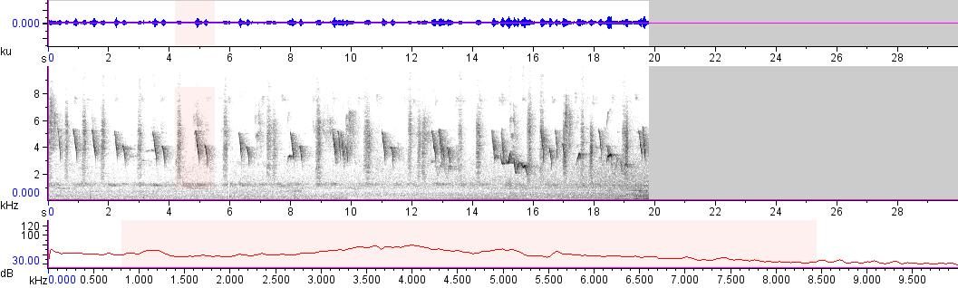 Sonogram of recording #AV 15962