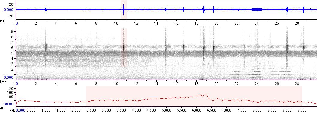 Sonogram of recording #AV 15971