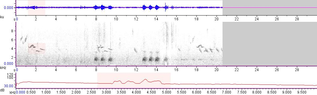 Sonogram of recording #AV 15982