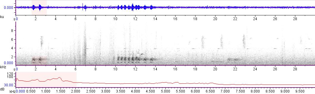 Sonogram of recording #AV 15984