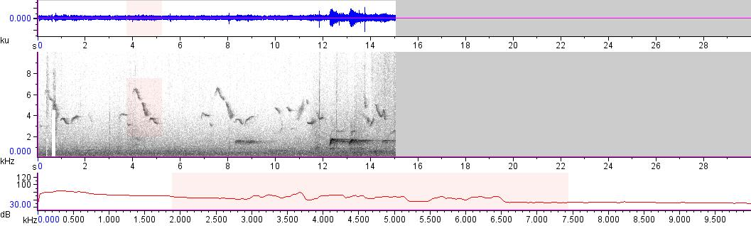 Sonogram of recording #AV 15995