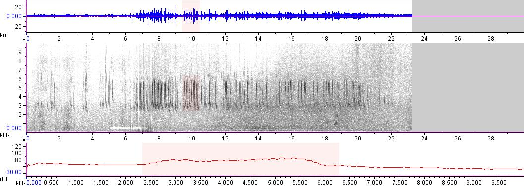Sonogram of recording #AV 16030