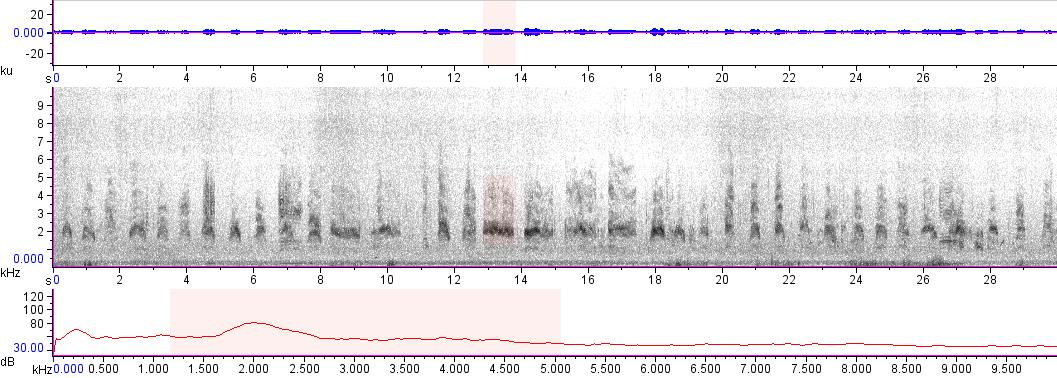 Sonogram of recording #AV 16040