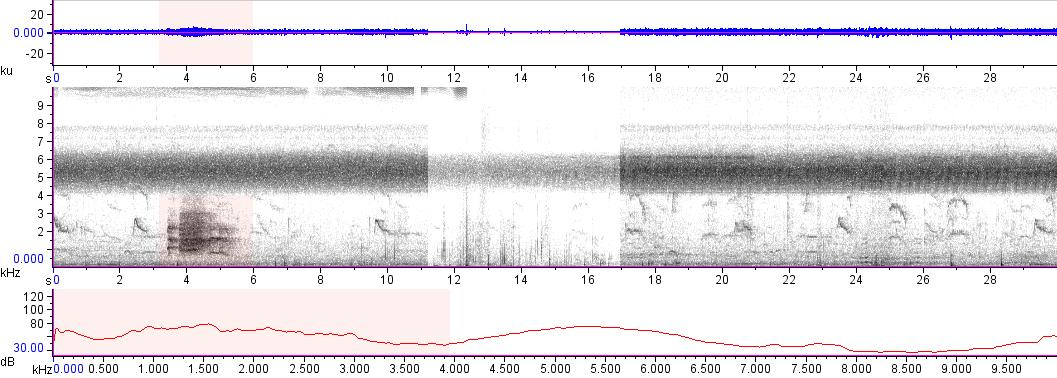 Sonogram of recording #AV 16091