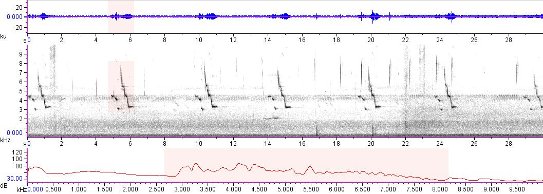 Sonogram of recording #AV 16146