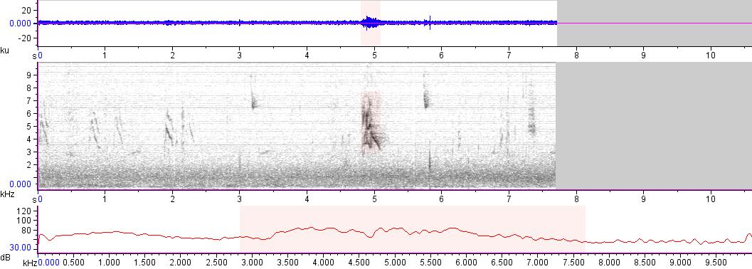 Sonogram of recording #AV 16177