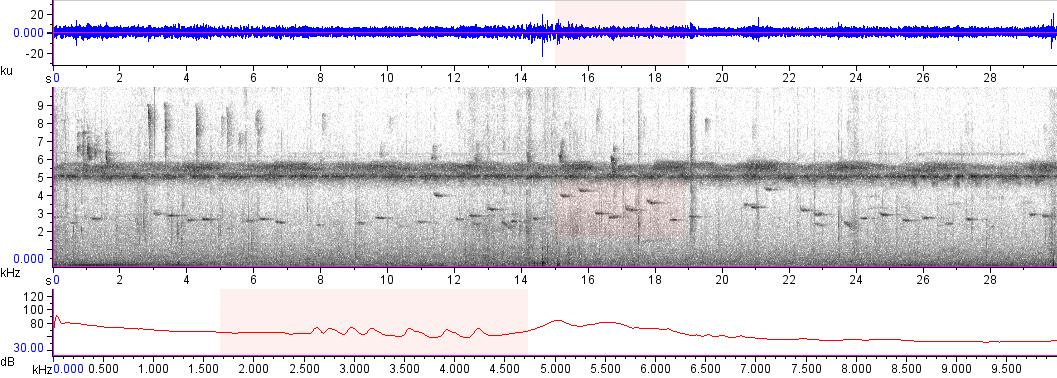 Sonogram of recording #AV 16182