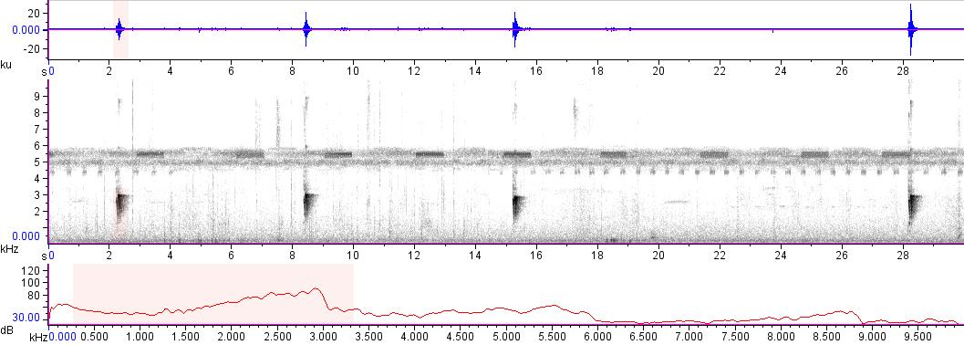Sonogram of recording #AV 16183