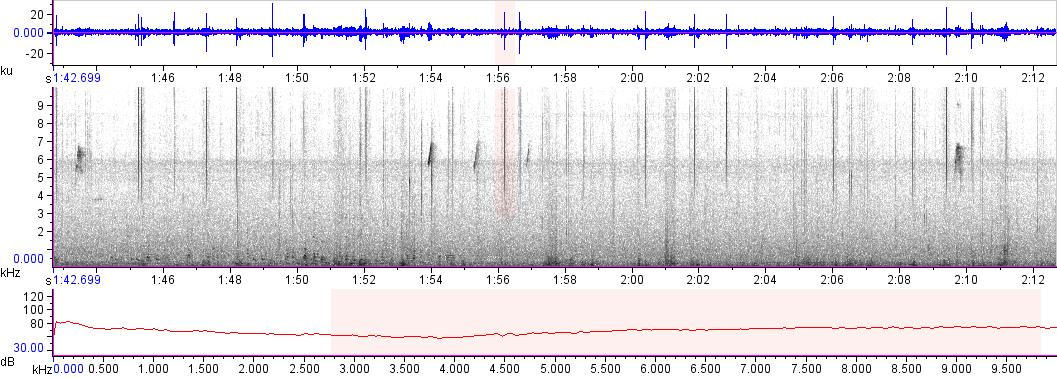 Sonogram of recording #AV 16186