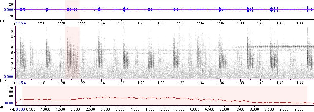 Sonogram of recording #AV 16192