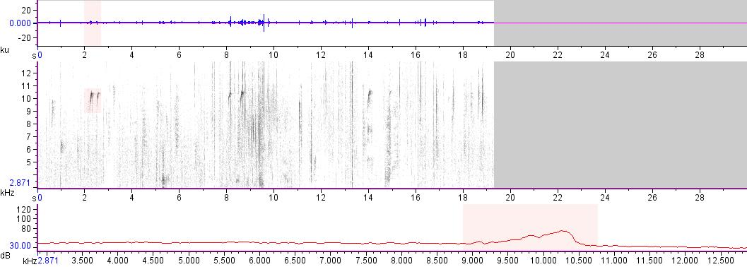 Sonogram of recording #AV 16194