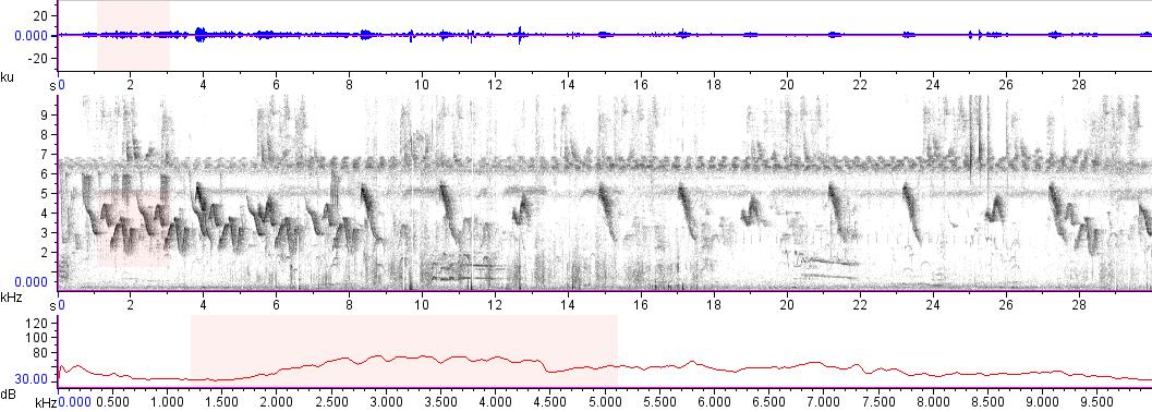 Sonogram of recording #AV 16222
