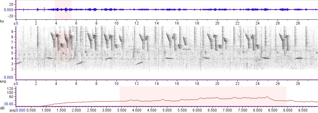 Sonogram of recording #AV 16236