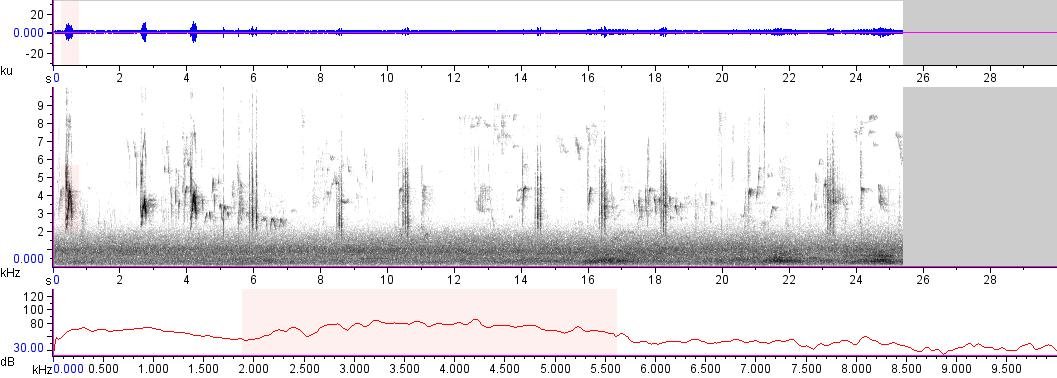 Sonogram of recording #AV 16283