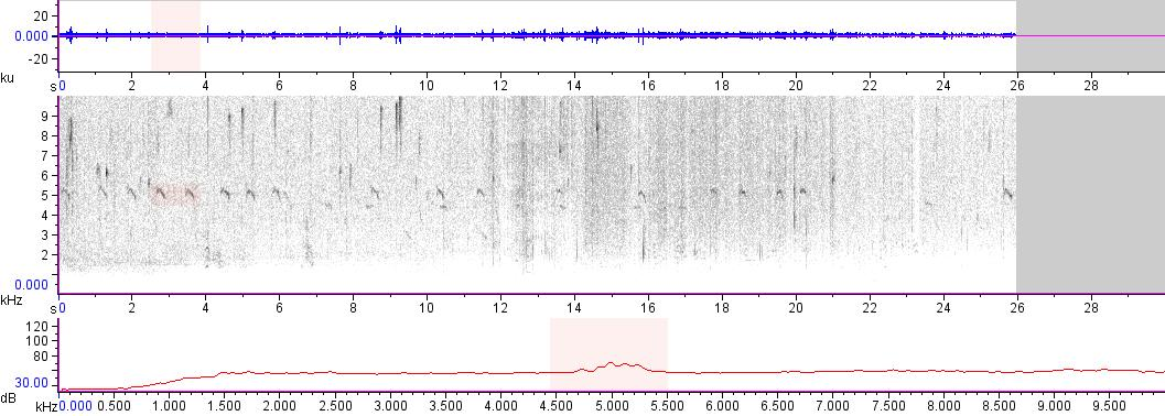 Sonogram of recording #AV 16324