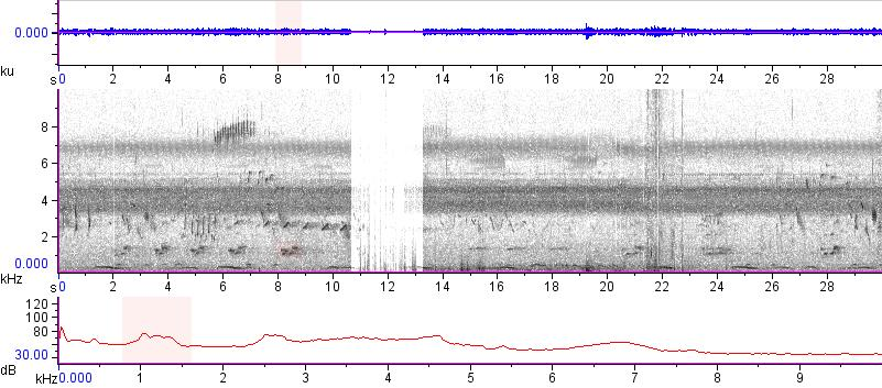 Sonogram of recording #AV 16327
